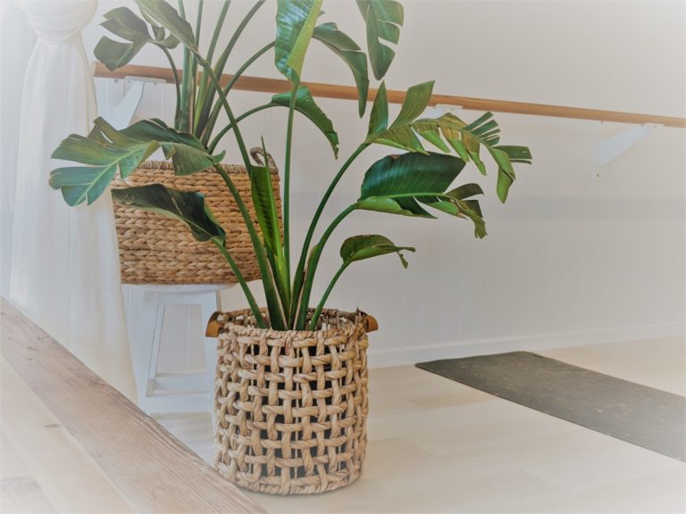 haven yoga barre pilates sunshine coast studio plant